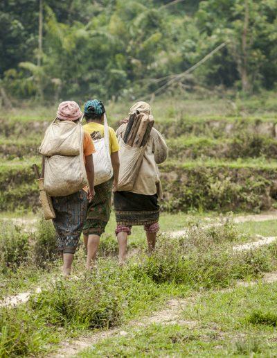 Photographie de voyage. Femmes dans une rizière au Laos